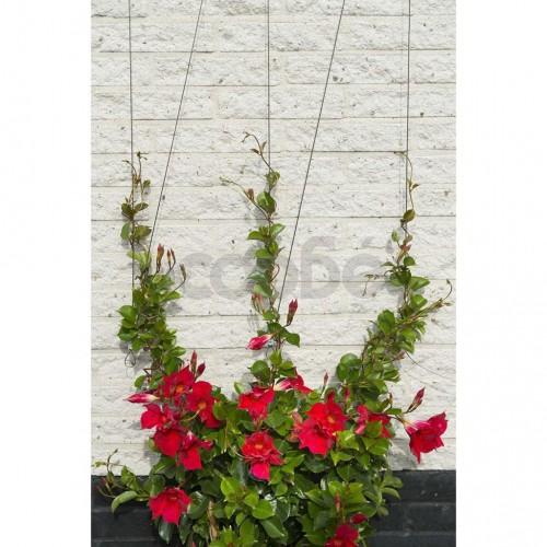 Nature Телен комплект за увивни растения 6040760